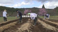 【動画】ウルシの種の準備から種まき作業まで