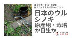 日本のウルシノキ 原産地・栽培か自生か